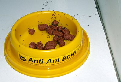 Anti-Ant